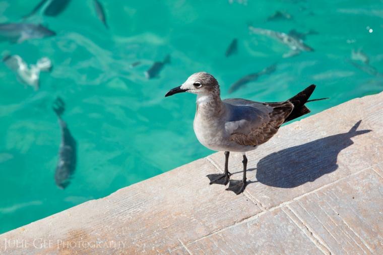 Barcelo Resort Pier