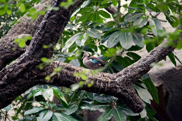 duck on tree